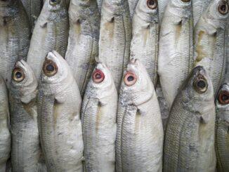 замразена риба
